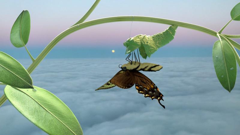 Ein Schmetterling hängt im Himmel über den Wolken Kopfüber an einer Planze.