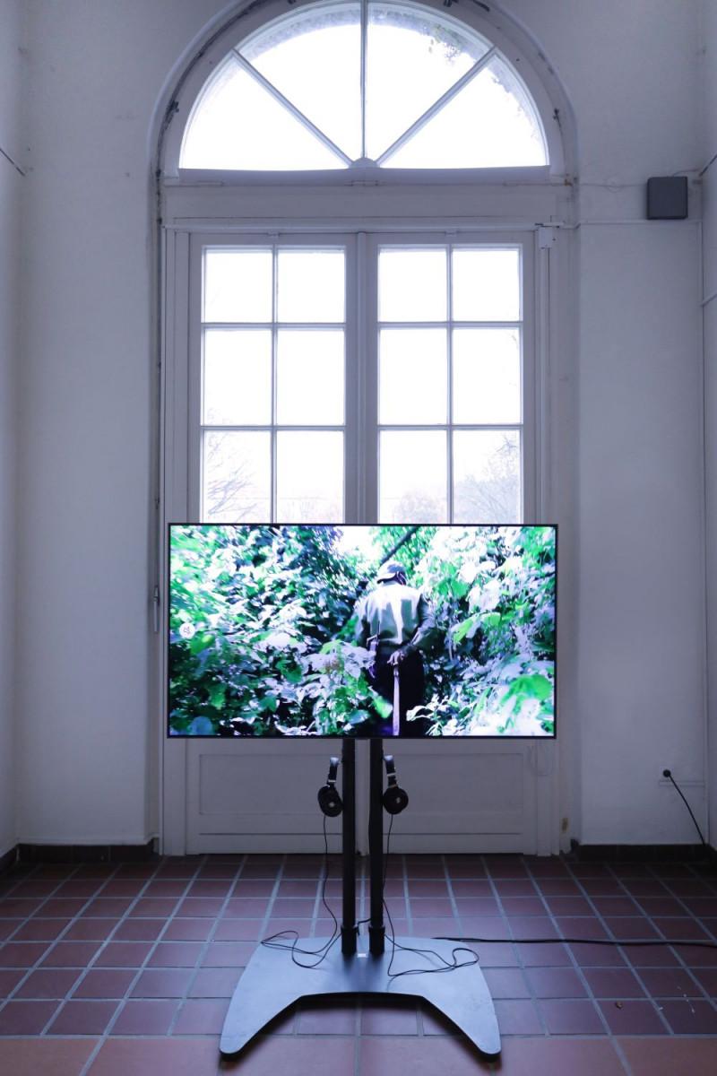 Auf einem großen Bildschirm ist eine Videoaufnahme aus einem Dschungel zu sehen.