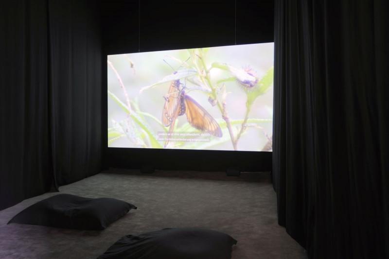 In einem verdunkelten Videoraum ist eine Filmserie an die Wand projiziert, die ein Naturbild zeigt.